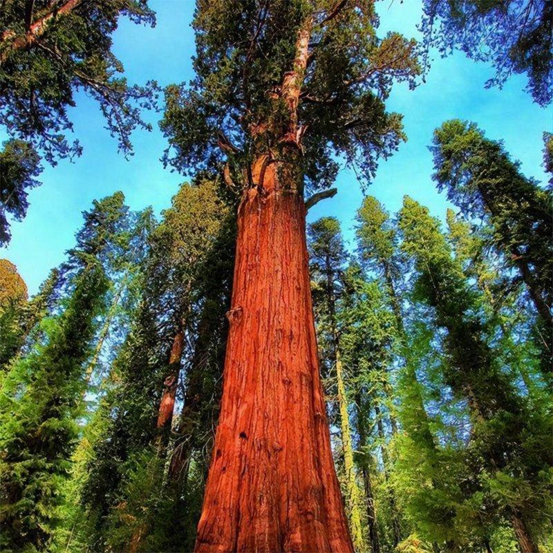 семена деревьев цена